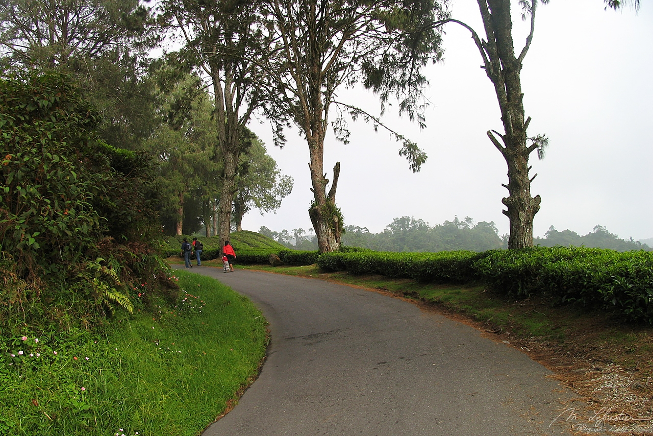 locals are walking on a road in Cameron Highlands in Malaysia