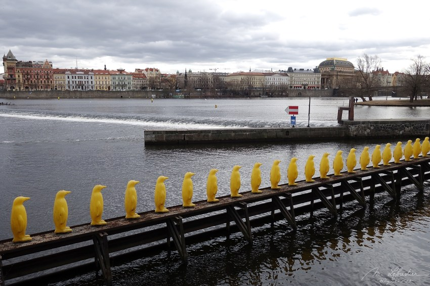 34 yellow penguins made of recycled bottles bringing an important message on climate change in Prague