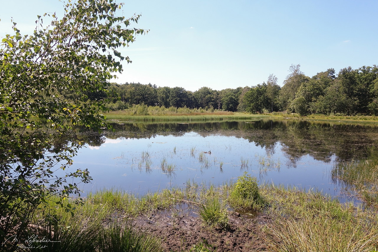 a view of Stratumse Heide during the Summer 2020, nature reserve in Eindhoven / Geldrop in the Netherlands