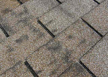 Granule Loss - Denver Roofing Contractor