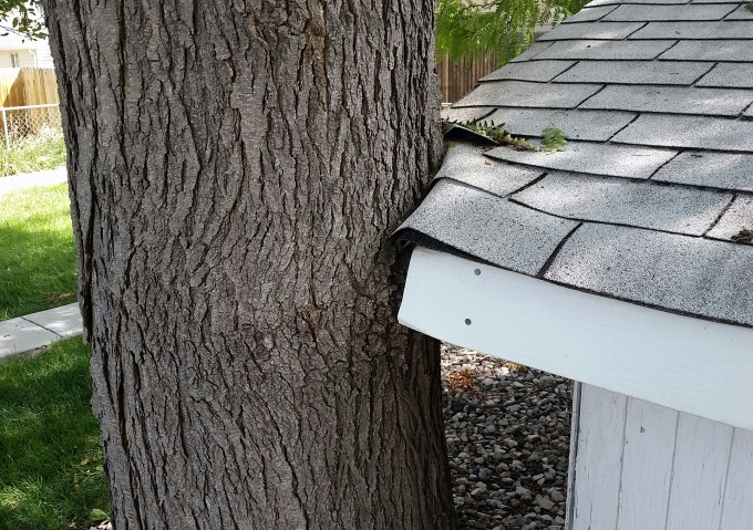 Tree Out Grows Roof – Denver Roofing Repair