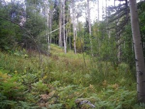 Land for sale in Garfield Colorado