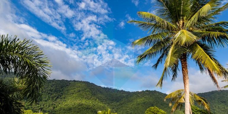 Villa-Jungle-Web-4