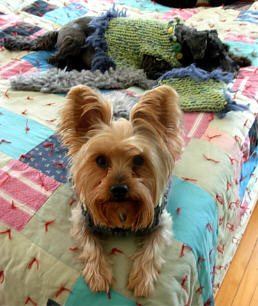 Knitting Leftovers = 'Furrrocious' Dog Sweaters Four Ways (1/6)