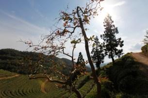South Korea - Gwangyang