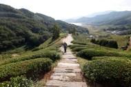 South Korea - Rice terraces in Gwangyang