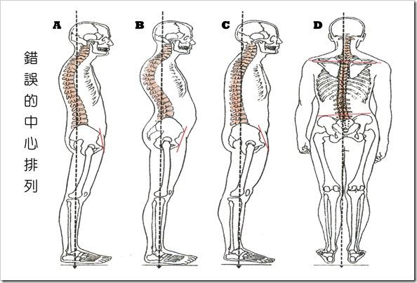 排列的基礎學習 | 瑜伽 皮拉提斯 身體的覺醒
