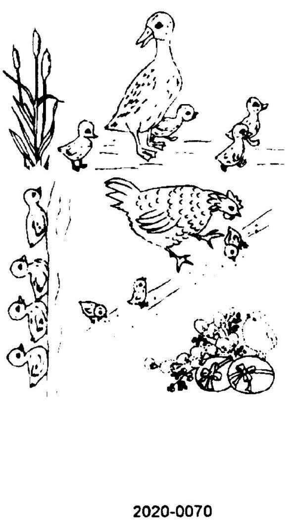 transfer fuglar