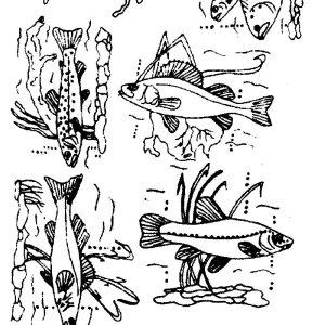 transfer, fiskar