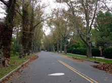 Battle Road lined with sycamore trees.