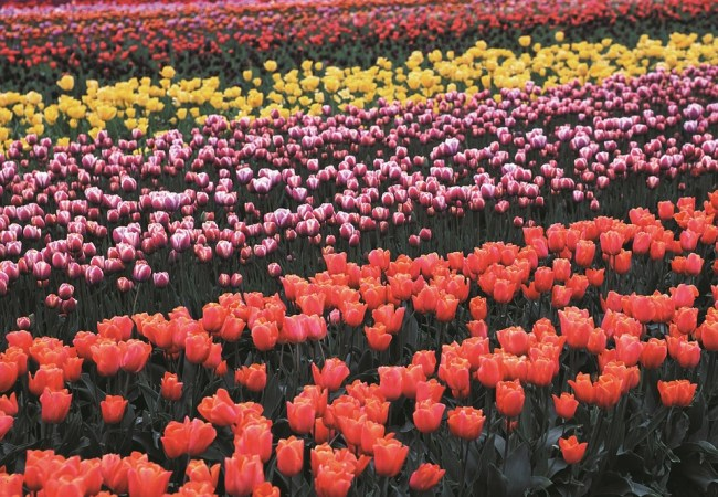 Celebrate Nature With Oregon's Flower Festivals In 2017!