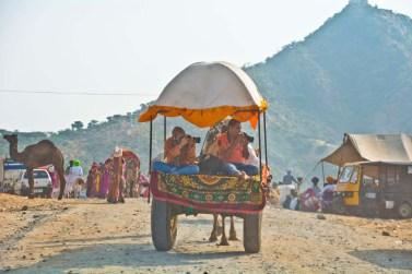 Camel cart photographers