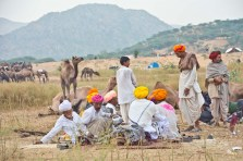 Pushkar camel fair in morning