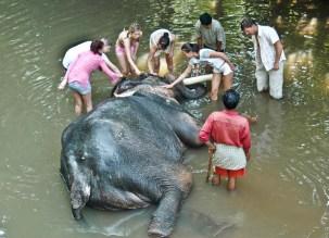 elephant-wash