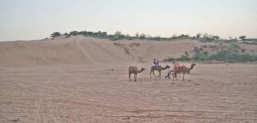 osian sand dunes 11