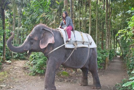Elephant at spice garden Periyar