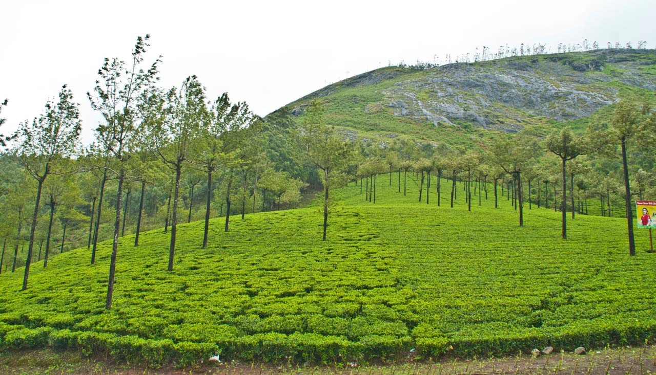 Munnar places to visit – The Tea Town of Kerala