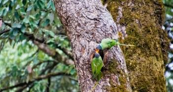 Parrots_1