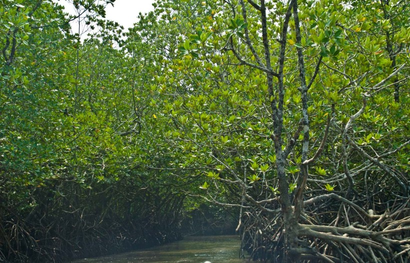 Mangroves Most Beautiful Places in India