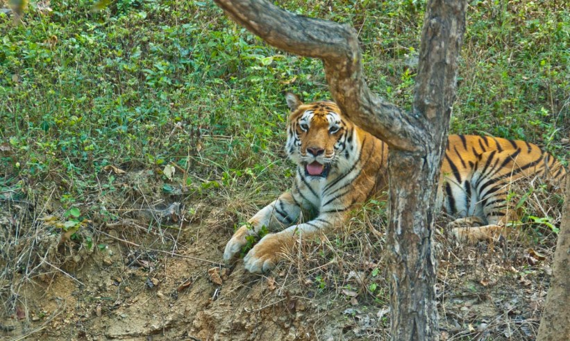Tiger Most Beautiful Places in India