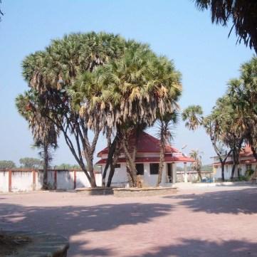 Hokka Tree Diu