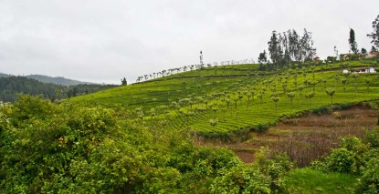 Landscape from Ooty to Metupalaiyam