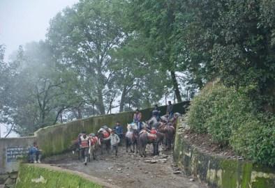 People on Horses in Kufri