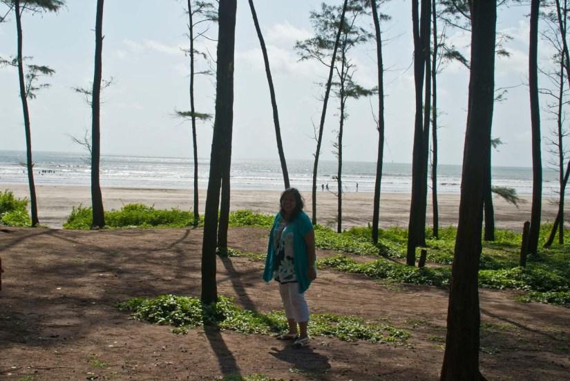 Trees at beach in Alibaug