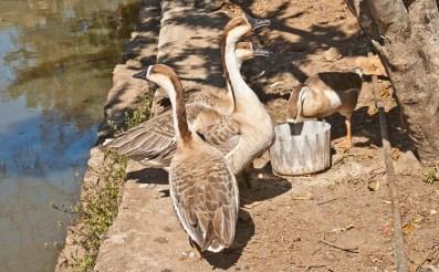 Birds in Lady Hydari park Shillong
