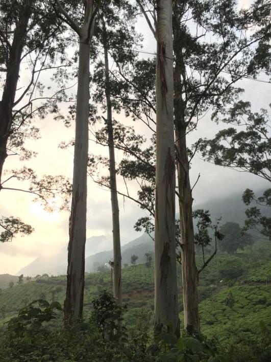 In Munnar erwische ich kurz vor sechs Uhr abends grad noch die letzten Sonnenstrahlen.