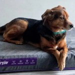 Purple Mattress Topper What Is Hyper Elastic Polymer