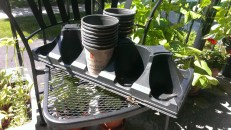 If you've got any plastic pots from garden centres, check and see if you can bring them back for recycling!
