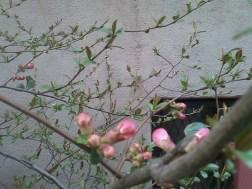 Blooming in Chelsea 001