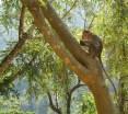 singes rencontrés en bordure de la jungle, en route vers Munnar - Kerala © ChPL Mysore05 / dec 2013