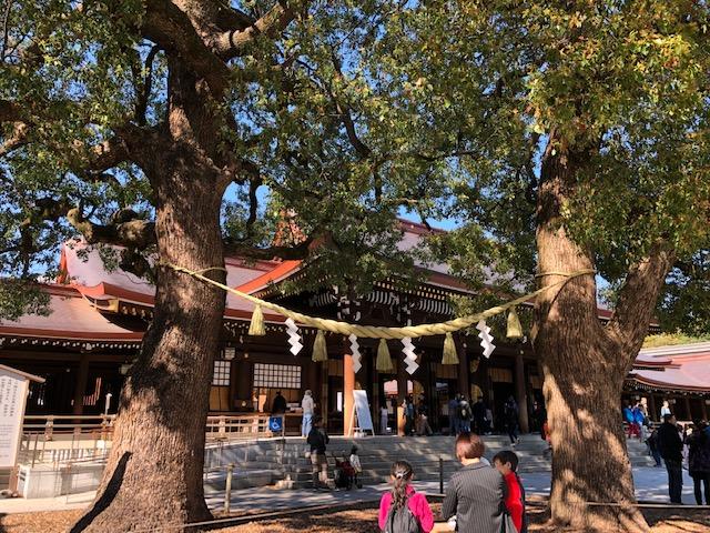 Meoto Kusu: The Coupled Trees| #ThursdayTreeLove