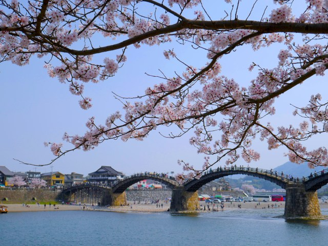 photo of kintai bridge and a sakura tree in the foreground