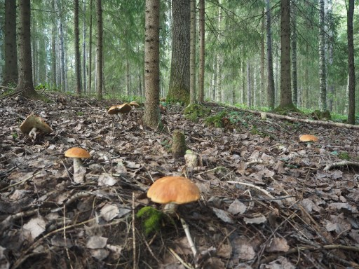 forest bathing, nature, forest therapy, self care,