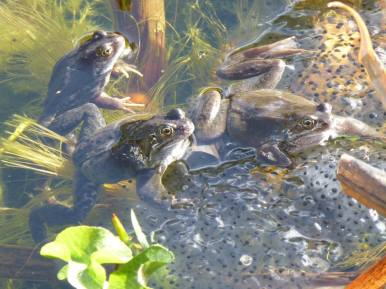 Charlotte Wiles Frogs and Spawn 2
