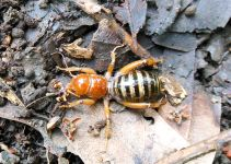 How to Correctly Identify and Remove Potato Bug