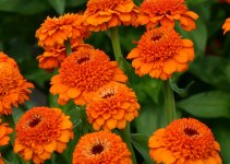 20 Stunning Orange Flowers for the Curb Appeal
