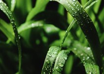 Quack Grass: How to Get Rid of It from Lawn