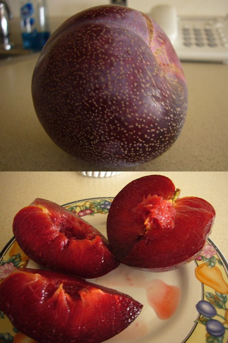How to Eat Pluots