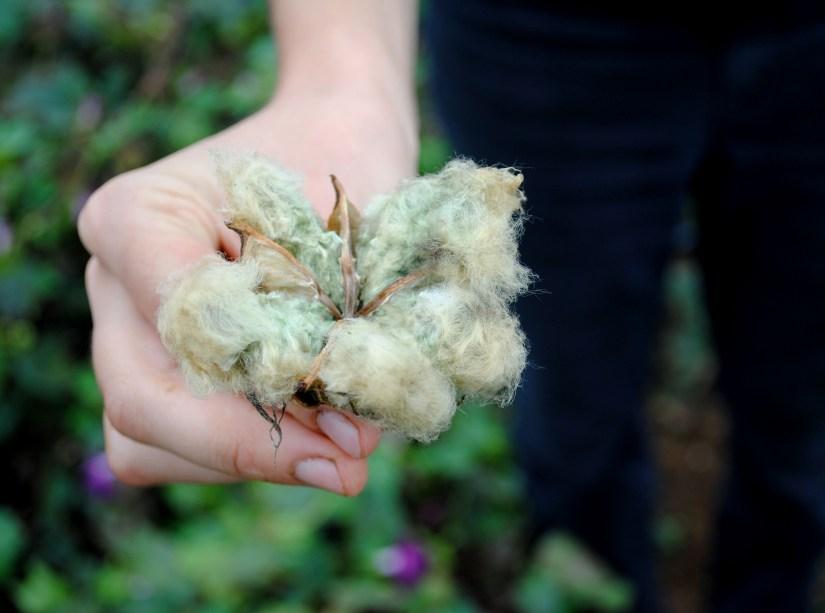 Arkansas Green Lint Cotton