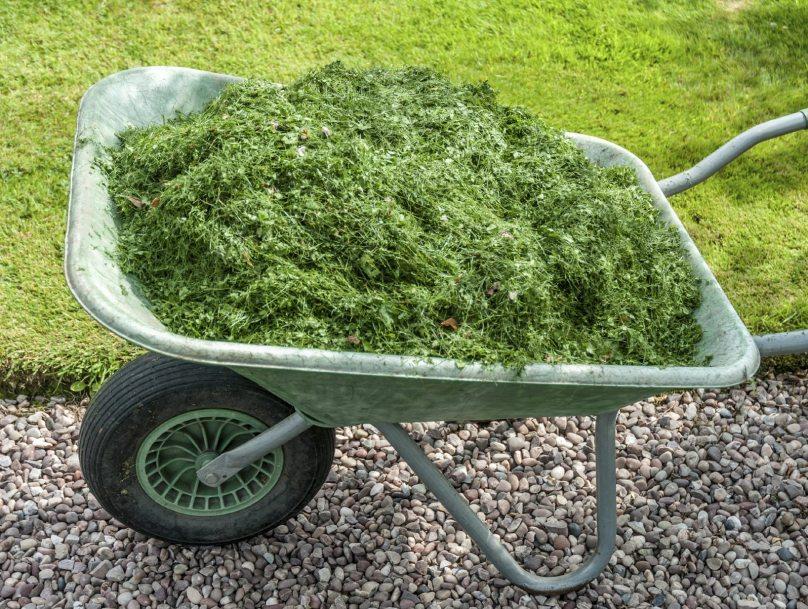 Grass Clippings as Mulch