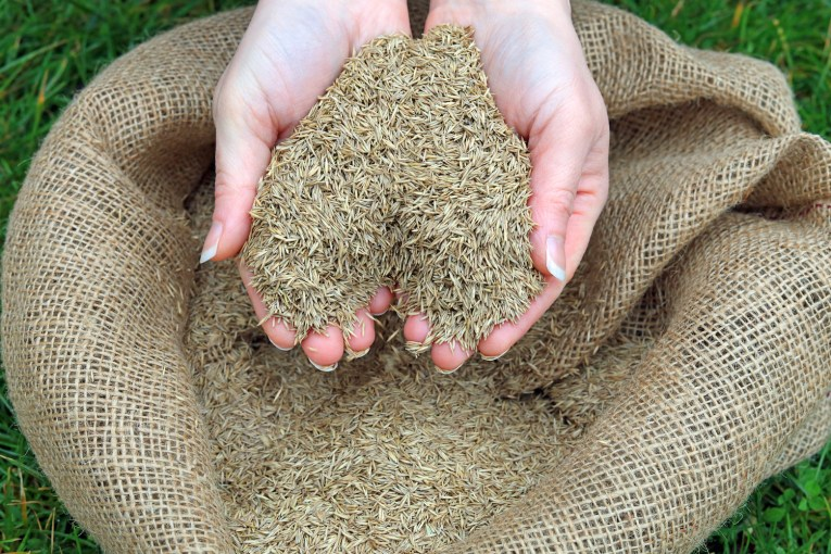 Best Grass Seeds for the Northern States