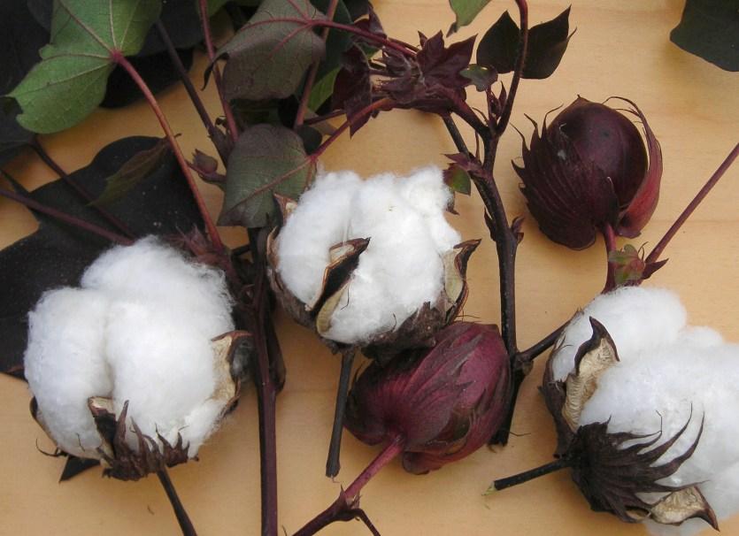 Red Foliated White Cotton