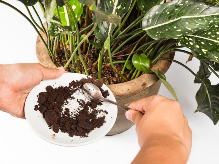 Coffee Grounds in the Soil