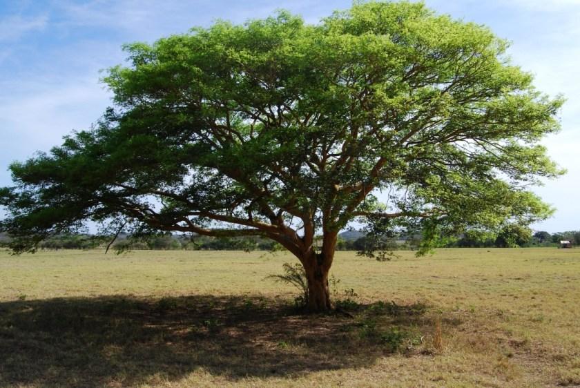 5 Year Old Oak Tree Size