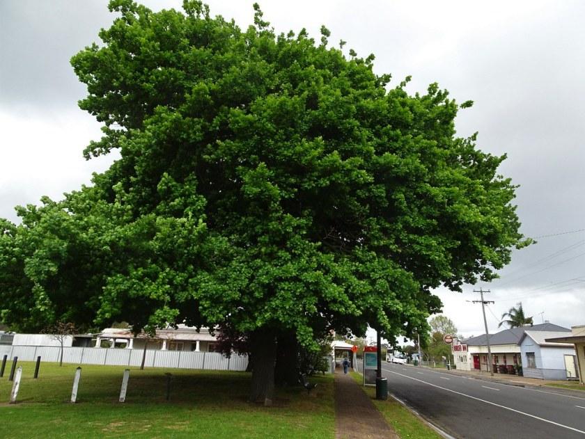 10 Year Old Oak Tree Size
