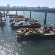 Sea lions galore!